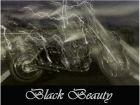 BLACK BEAUTYさん