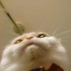 ゴリフさんのプロフィール写真
